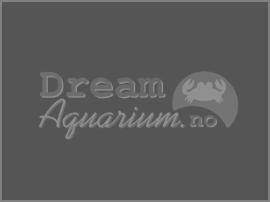Dream Aquarium: Bergen, Norway